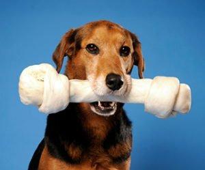 Cani con più possibilità di ammalarsi di cancro