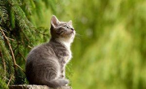 Cosa dare da mangiare al gatto di casa