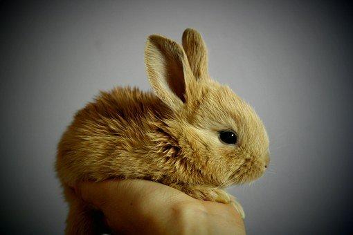 Il coniglietto nano