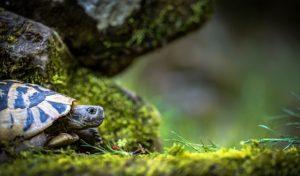 Consigli per chi ha una tartaruga di terra