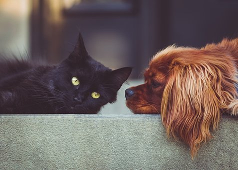 Quale animale domestico scegliere