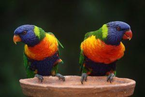 La giusta voliera per i pappagalli