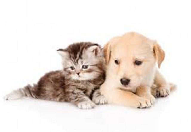 Tanti accessori per animali