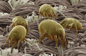 L'aspirapolvere per gli allergici