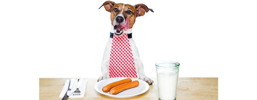 Alimentazione dei cani