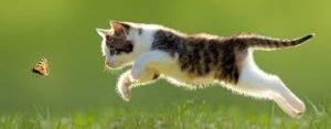 L'educazione del gattino