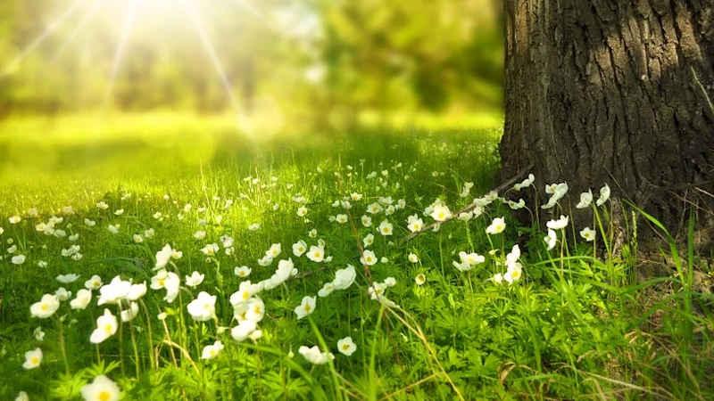 Natura e equilibrio tra uomo e ambiente naturale