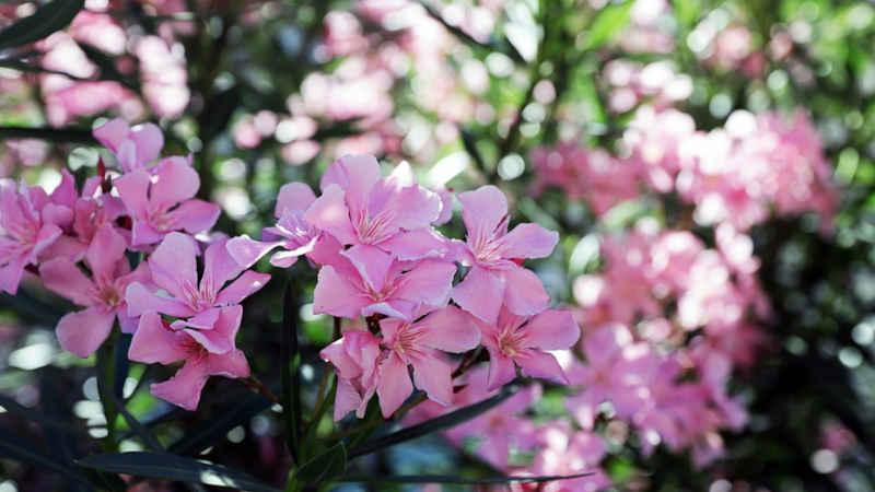 Quali giardino del Ticino visitare in primavera